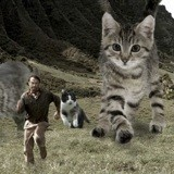 Quelqu'un a remplacé les dinosaures de Jurassic Park par des chats et c'est juste génial (Photos)