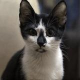 Pussy, le chat héroïque qui a sauvé son maître des flammes