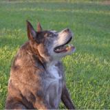 Voici Quasi Modo, le chien le plus laid de l'année, et il a un message à faire passer