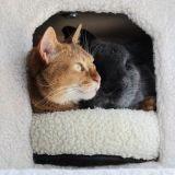 Adoptés dans un refuge, un lapin et un chat deviennent meilleurs amis (Photos)