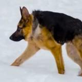 Ce chien a été abandonné à cause de son étrange pathologie, son histoire est bouleversante