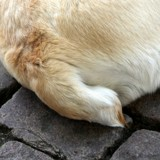 Mon chien remue sa queue, qu'est-ce que ça veut dire ?