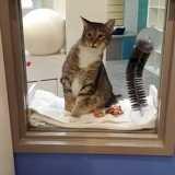 Ce chat sème la panique dans son refuge pour une raison qui fait beaucoup rire tout le monde
