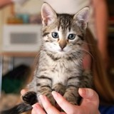 Quizz : Pensez-vous tout savoir sur l'allergie aux chats ?