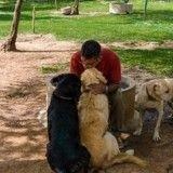 Un ingénieur indien dédie sa vie aux sauvetages de chiens