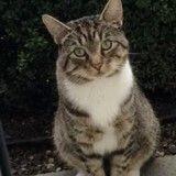 Ce chat attend chaque jour devant chez son voisin pour passer du temps avec son amoureuse