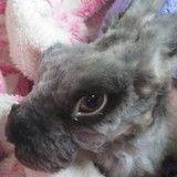 Délaissé par son ancien propriétaire, Rambo le lapin est un miraculé