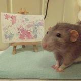 Voici Darius, un rat trop mignon qui peint des tableaux avec ses pattes