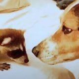 Ce raton laveur a comme meilleur ami un chien (Vidéo du jour)