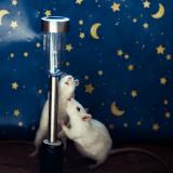 Elle photographie des animaux libérés des laboratoires et leur offre une seconde chance