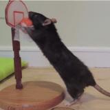 La vidéo qui va vous donner envie d'adopter un rat