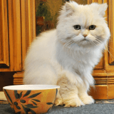 La recette pour chat de la semaine : Tartare de colin et algues