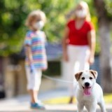 Reconfinement coronavirus : parcs ouverts, limitation des heures de sortie, promenade des chiens… Tout comprendre !