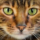 Mon chien/chat est-il capable de me reconnaitre ?