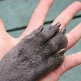 Rééduquer un chien en 5 leçons