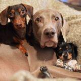 Quand un adorable chiot rejoint le duo canin le plus craquant du web (Photos)