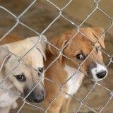 Doit-on en finir avec l'isolement des chiens en box dans les refuges ?