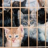 """Suite au confinement, c'est la panique dans les refuges : """"On ne sait plus où mettre les chatons"""""""