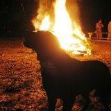 Les animaux menacés par les incendies en Russie
