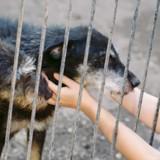 La SPA de Lyon fête les animaux : venez nombreux les 5 & 6 octobre !