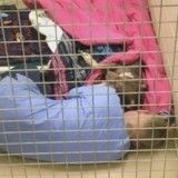 Afin de réconforter une chienne abandonnée dans son refuge, elle s'allonge à ses côtés