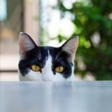 Pourquoi mon chat me fixe et me saute dessus ?