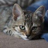 Chats et chiens peuvent-ils souffrir du blues de la rentrée ?