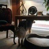 Un chien très attaché à sa maîtresse attend son retour jour après jour