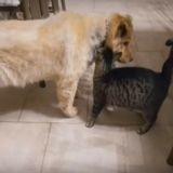 Les émouvantes retrouvailles d'un chat et de son meilleur ami canin aveugle