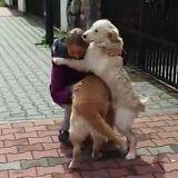 La réaction de ces chiens quand ils retrouvent leur maîtresse est incroyable ! (Vidéo du jour)