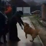 Un an et demi après avoir disparu, ce chien retrouve miraculeusement ses maîtres à la SPA ! (Vidéo)