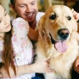Comment bien réussir l'adoption d'un chien de refuge ?