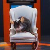 La première télé-réalité 100% souris est sur CANAL+family
