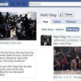 Kanellos, le chien qui suit toutes les manifestations en Grèce