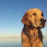 Ce chien qui fait du sport avec enthousiasme est une inspiration pour nous tous (Vidéo)