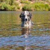 Alerte : plusieurs chiens décèdent après une baignade en région Centre-Val de Loire !