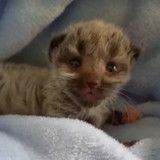 Né deux jours trop tôt, ce chaton va surprendre tout le monde