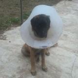 Les chroniques de Maître Terrin : 6 mois de prison avec sursis pour l'homme ayant traîné le chien Rocky derrière sa voiture