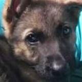 Ils déposent leur chien chez le vétérinaire pour un nettoyage des oreilles et reçoivent la pire des nouvelles