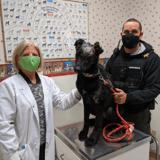 Un chiot brûlé par sa propriétaire va finalement devenir chien de thérapie pour les enfants brûlés