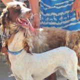 Touchant : une chienne refuse pendant 3 jours de quitter son compagnon blessé
