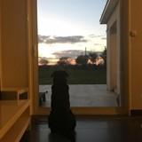 Le chien d'Emiliano Sala attend toujours son retour : sa photo a bouleversé le monde entier