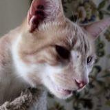 Ce chat ne ronronne comme aucun autre chat ! (Vidéo)