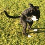 Ce chien à deux pattes se déplace comme un kangourou et fait fondre le web
