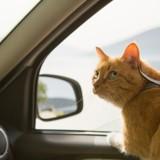 Saint-Pal-de-Chalencon : un chat fait 80 km dans le moteur de sa voiture