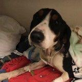 Ce chien dans un état pitoyable se nourrissait pour survivre (Photos)