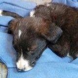 Elle trouve un chiot blessé pendant ses vacances, les vétérinaires se mobilisent pour le soigner