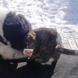 Endeuillé, ce chien a trouvé du réconfort auprès d'un chat errant