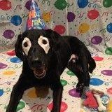 Atteint de vitiligo, ce chien au passé douloureux est aujourd'hui très heureux