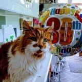 Le plus vieux chat du monde fête ses 30 ans !